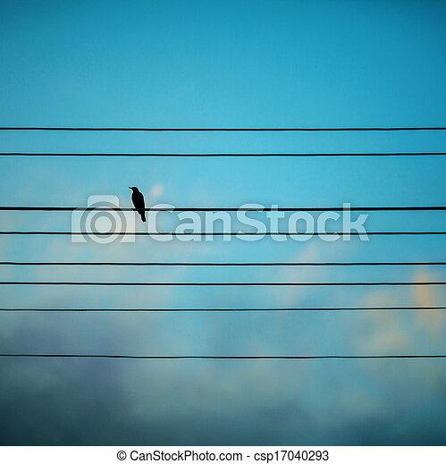 Bird on a blue background - csp17040293