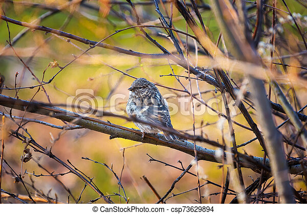 Bird on a branch in the autumn forest - csp73629894