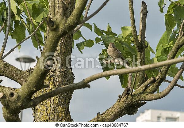 Bird on a tree branch - csp40084767