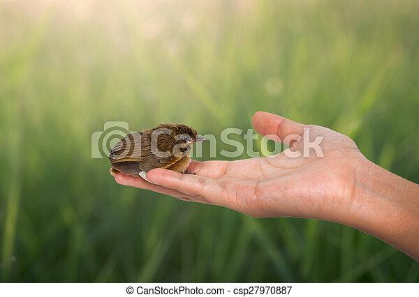bird on a women hand - csp27970887