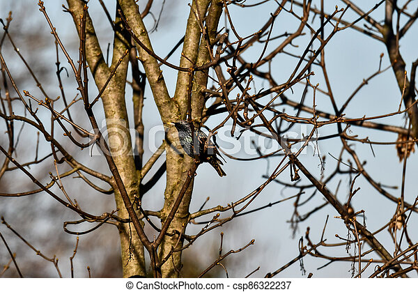 bird on branch, photo as a background - csp86322237