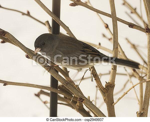 Bird on Branch - csp2949937