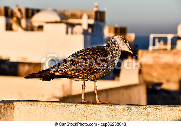 bird on fence, photo as background - csp86268043