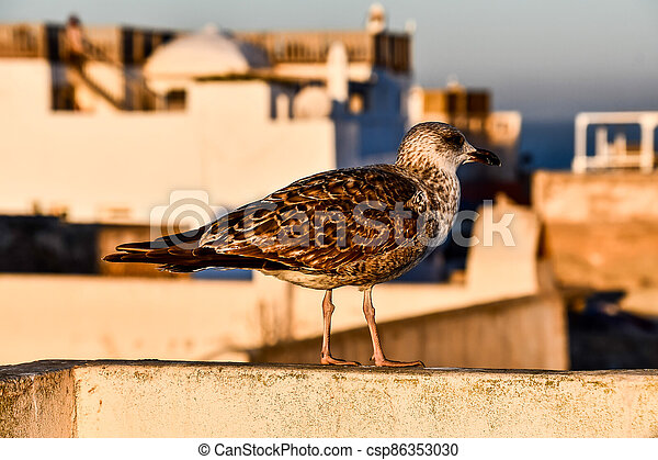 bird on the fence, photo as background - csp86353030