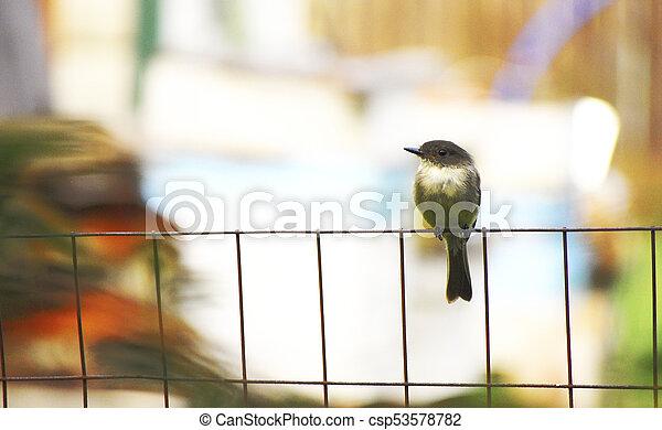 Bird on the fence - csp53578782