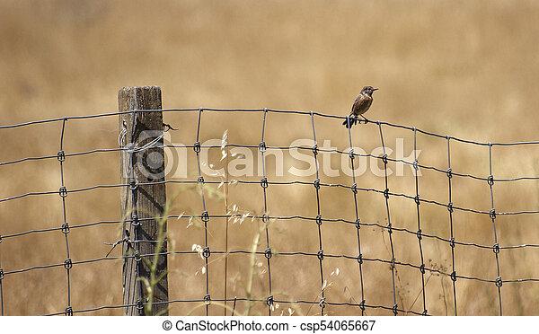 Bird on the fence - csp54065667