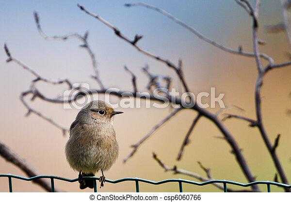 bird on the fence - csp6060766