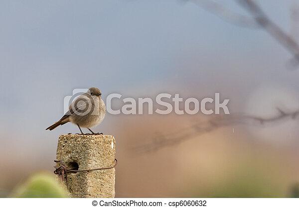 bird on the fence - csp6060632