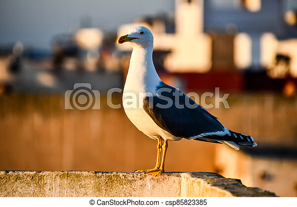 bird on the roof, photo as background - csp85823385