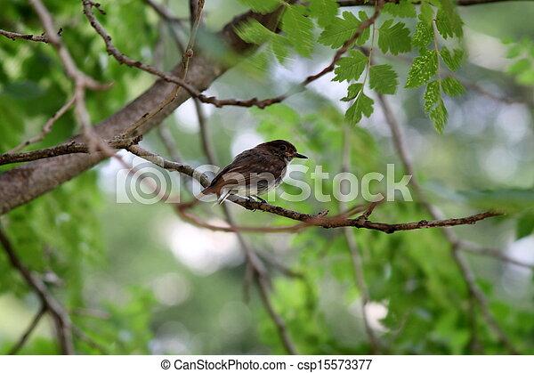 bird on the tree - csp15573377