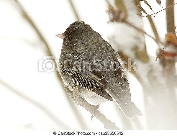 Bird Perched on Branch Snow Storm - csp33650542