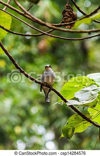 bird - csp14284576