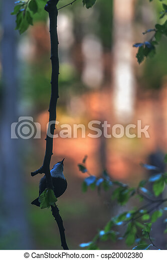 bird - csp20002380