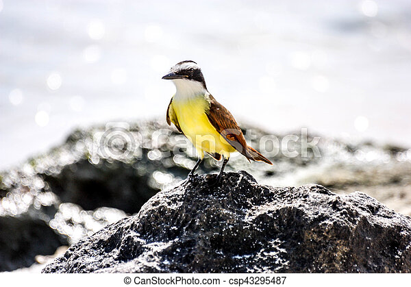 Bird - csp43295487