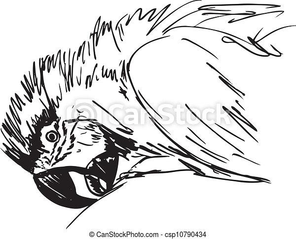 bird., rys, wektor, ara, ilustracja - csp10790434
