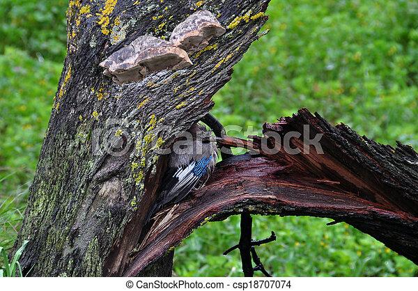 bird sheltering broken tree - csp18707074