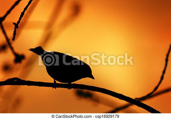Bird Silhouette on a Branch - csp16929179
