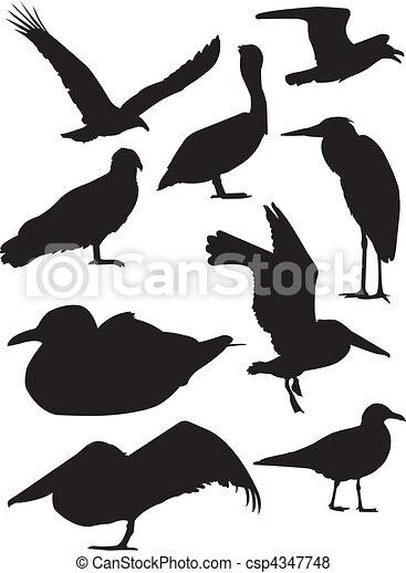 Bird Silhouettes - csp4347748