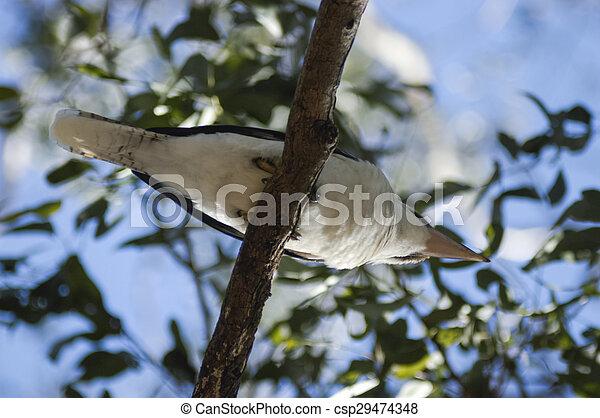 Bird sitiing on a branch - csp29474348