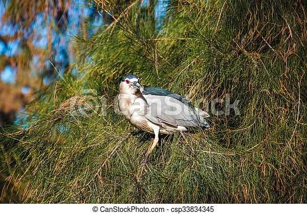 bird sitting on the branch - csp33834345