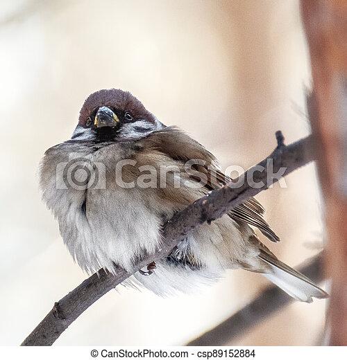 Bird sparrow close-up - csp89152884