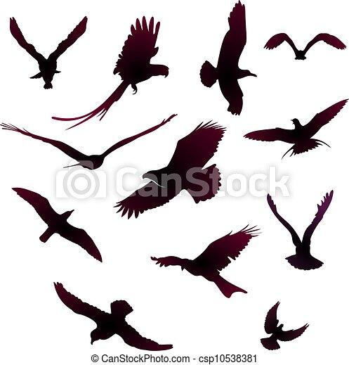 bird - csp10538381