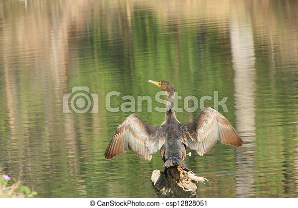 bird - csp12828051