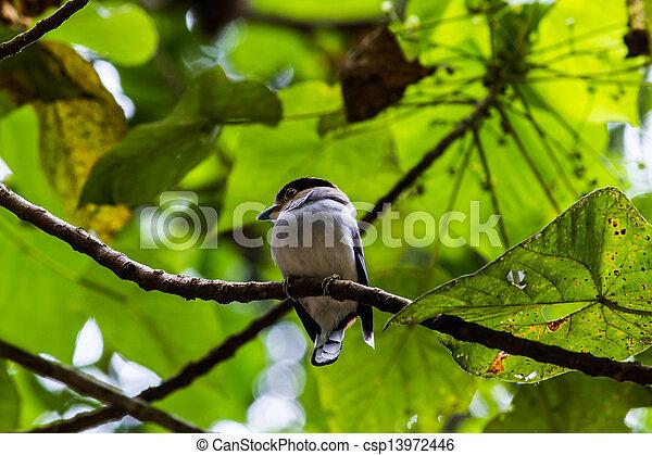 bird - csp13972446