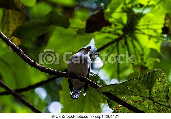 bird - csp14284421