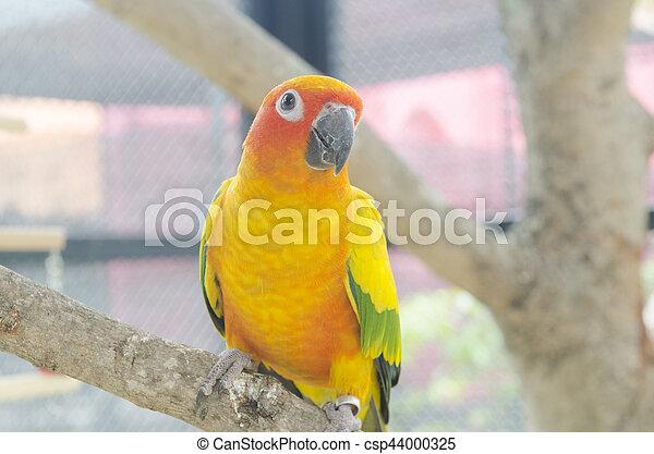 Bird - csp44000325