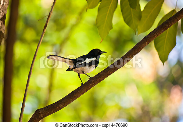 bird - csp14470690