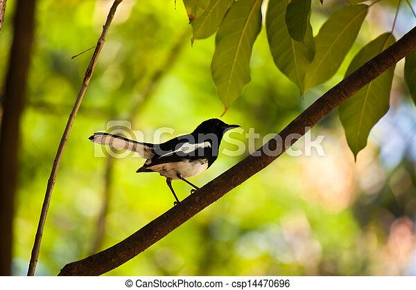 bird - csp14470696