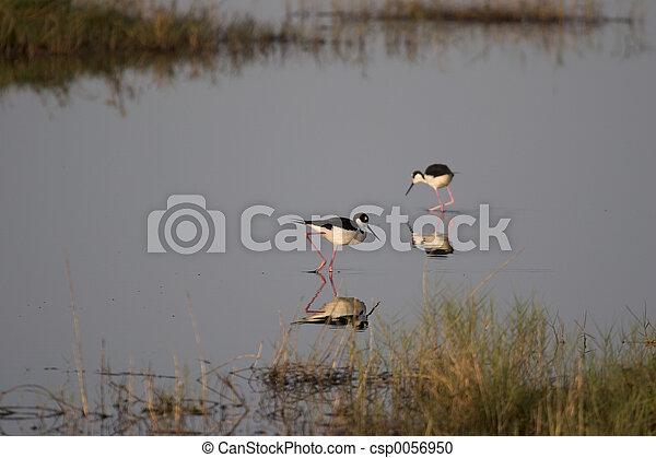 Bird - csp0056950