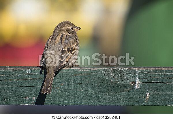 bird - csp13282401