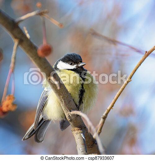 Bird tit sitting on a branch - csp87933607
