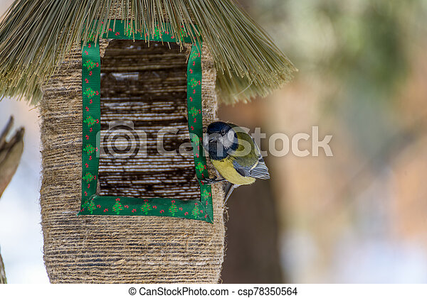 bird tit sitting on the feeder - csp78350564
