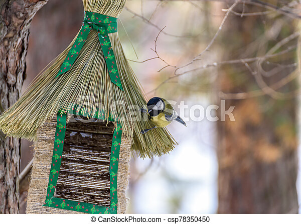 bird tit sitting on the feeder - csp78350450