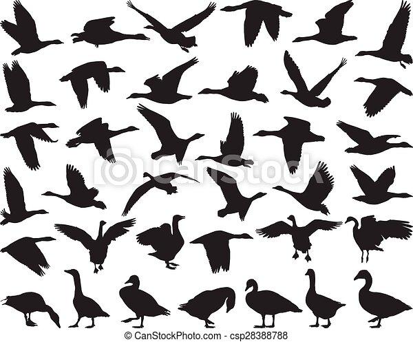 Bird wild geese - csp28388788