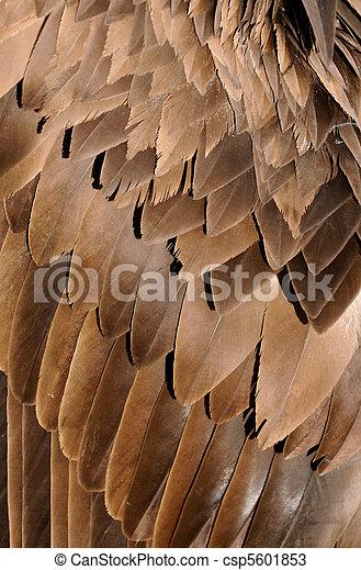 Bird wings - csp5601853
