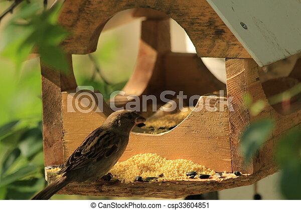 Pajarito para pájaros - csp33604851
