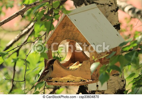 Pajarito para pájaros - csp33604870