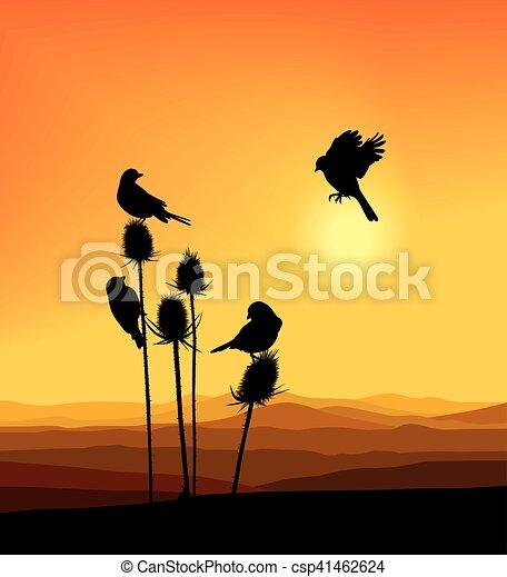 Birdie on a thistle - csp41462624