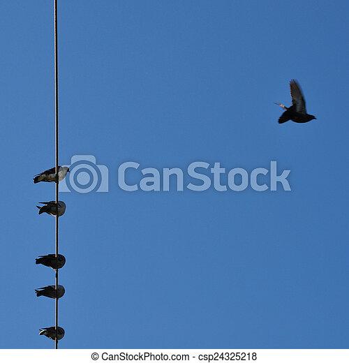 birds blue sky - csp24325218