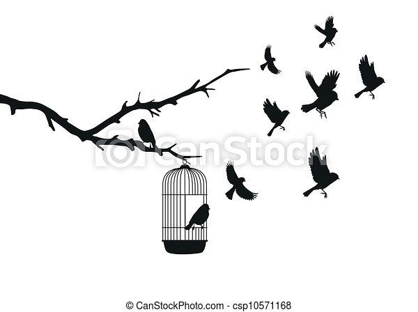 birds - csp10571168