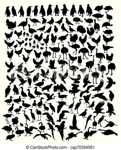 Birds - csp70354561