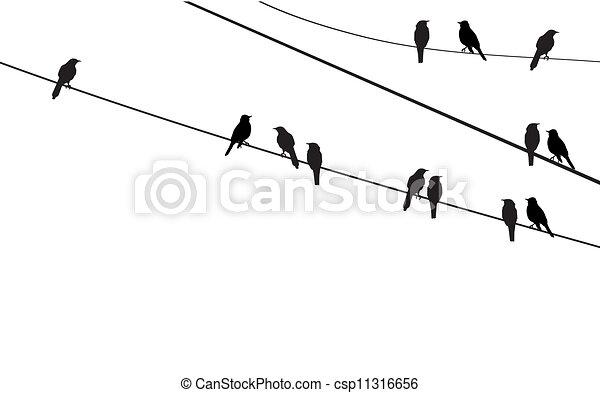 birds - csp11316656