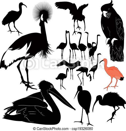 birds - csp19326080