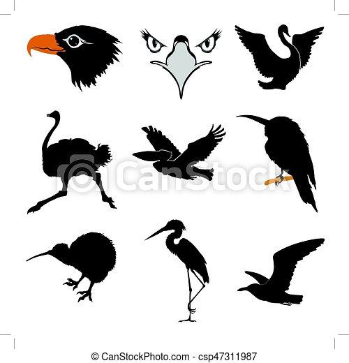 birds - csp47311987