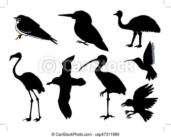 birds - csp47311989