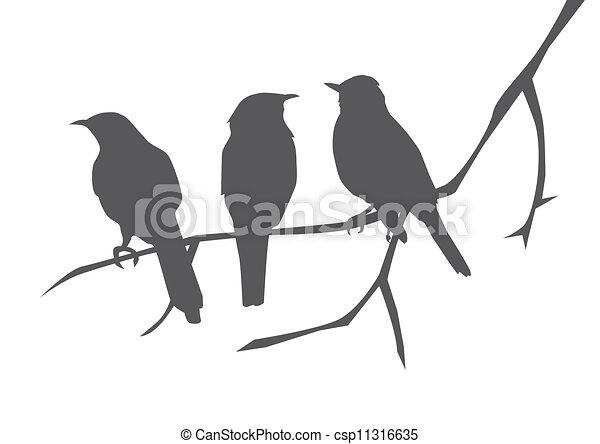 birds - csp11316635